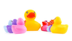Big rubber duckling towering above little ducklings looking up to it Royalty Free Stock Photo
