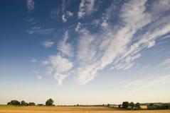 Big rural golden landscape Stock Images