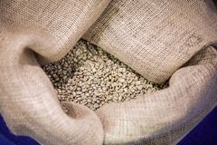 Big sack of coffee beans waiting to be roasted in roaster warehouse stock image