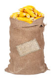 Big sack of corn cobs Royalty Free Stock Image