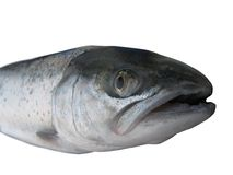 Big salmon Royalty Free Stock Images