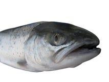 Big salmon Royalty Free Stock Images