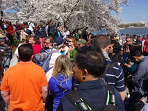 Big Saturday Crowd. Photo of large crowd of people at the tidal basin in Washington dc on 4/11/15.  They are here to see the cherry blossoms.  This year brought Stock Images