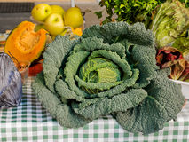Big savoy cabbage Royalty Free Stock Images