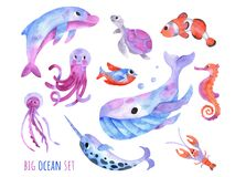 Big sea collection with cute whale, dolphin, narwhal, fish, clownfish, seahorse, turtle, jellyfish, crawfish. Big ocean set of