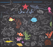 Big sea life animals hand drawn sketch set. doodles of fish, shark, octopus, starfish and crab, whale and sea turtle, seahorse and. Seashells and lettering, on Royalty Free Stock Image