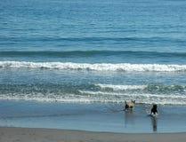 Big sea, little dogs Stock Image