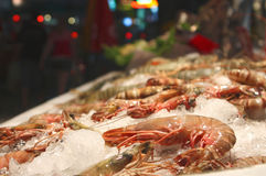 Big sea prawn on ice counter. Big sea prawns placed on on ice counter closeup view Royalty Free Stock Photography