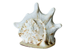 Big sea shell isolated on white background Royalty Free Stock Photos