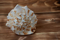 Big sea shell lying on the surface of the wooden aged background. close up Royalty Free Stock Photo