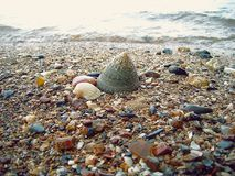 Big sea shell on sand beach. Front of sea wave, background, close up Stock Image
