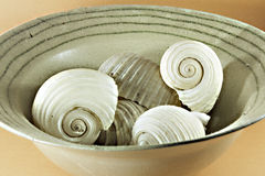 Big sea shells in a ceramic vase Royalty Free Stock Images