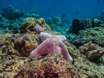 Big sea star at sea bottom Royalty Free Stock Photos