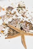 Big sea star, seashells, crab claw, stones, corals on white background, travel conception, selective focus royalty free stock photos
