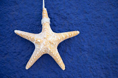 Big sea starfish on a blue wall Royalty Free Stock Image
