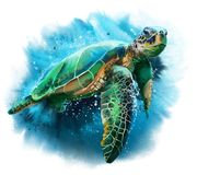 Big Sea Turtle Stock Photo
