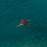 Big sea turtle in Mediterranean sea neaby Antalya, Turkey Stock Image