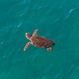 Big sea turtle in Mediterranean sea neaby Antalya, Turkey Royalty Free Stock Photography