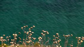 The Big Sea Water and Plant. Video stock video footage