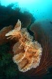 Big seafan Stock Image