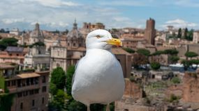 Big seagull above the ancient city stock image