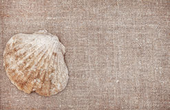 Big seashell on burlap background Stock Image