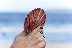 Big seashell held by a foot. Pretty red scallop shell held by toes with white sand in the background Royalty Free Stock Image