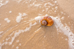 Big seashell on the sand on the beach Stock Photo