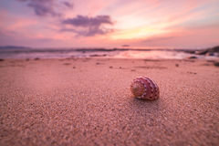 Big seashell on the sand on the beach in the back-light of sunse Royalty Free Stock Photos