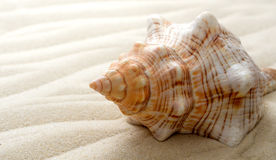 Big seashell on the sand on the beach, close up Stock Photo