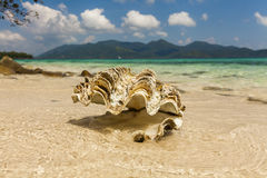 Big seashell on the sandy beach of a tropical island. Koh Chang. Stock Photo