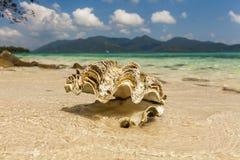 Big seashell on the sandy beach of a tropical island. Koh Chang. Stock Photo