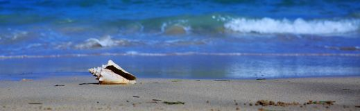 Sea shell on tropical beach. Travel background. royalty free stock photography