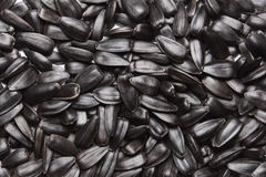 Big seeds. The big black seeds on background Royalty Free Stock Photography