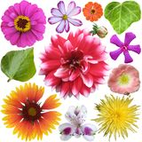 Big Selection of Colorful Flowers Royalty Free Stock Photos
