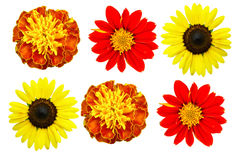 Big Selection Flower. Flowers Applied to various applications Background well Royalty Free Stock Images