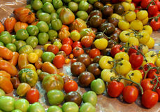 Tomato selection Royalty Free Stock Images
