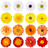 Big Selection of Various Flowers Isolated Royalty Free Stock Photo