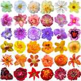 Big Selection of Various Flowers Royalty Free Stock Photo