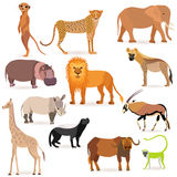 Big Set with African Animals. Set with such African Animals as meerkat, cheetah, elephant, lion, hyena, hippopotamus, rhinoceros, giraffe, honey badger, oryx Royalty Free Stock Photography