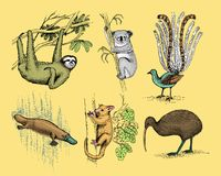Big set of australian and new zealand symbols, animal engraved, hand drawn   Royalty Free Stock Images