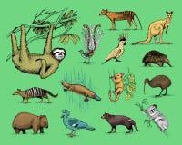 Big set of australian and new zealand symbols, animal engraved, hand drawn vector , vintage drawing tasmanian wolf, kea Stock Image