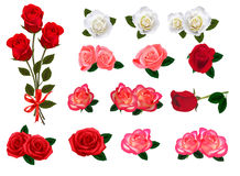 Big set of a beautiful colored roses. Royalty Free Stock Images