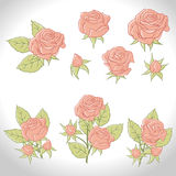 Big set of a beautiful colored roses. Vector Stock Photography