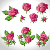Big set of a beautiful colored roses. Vector Royalty Free Stock Image