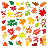 Big set of beautiful colorful autumn leaves.  design elements on white background. Vector illustration. Royalty Free Stock Photography