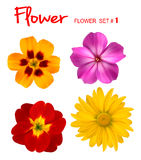 Big set of beautiful colorful flowers. Stock Images