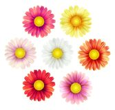 Big set of beautiful colorful spring daisy flowers isolated on white background. Vector illustration. EPS10 Stock Photo