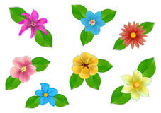 Big set of beautiful flowers on white background. Stock Images