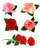 Big set of a beautiful roses. Vector Royalty Free Stock Photo
